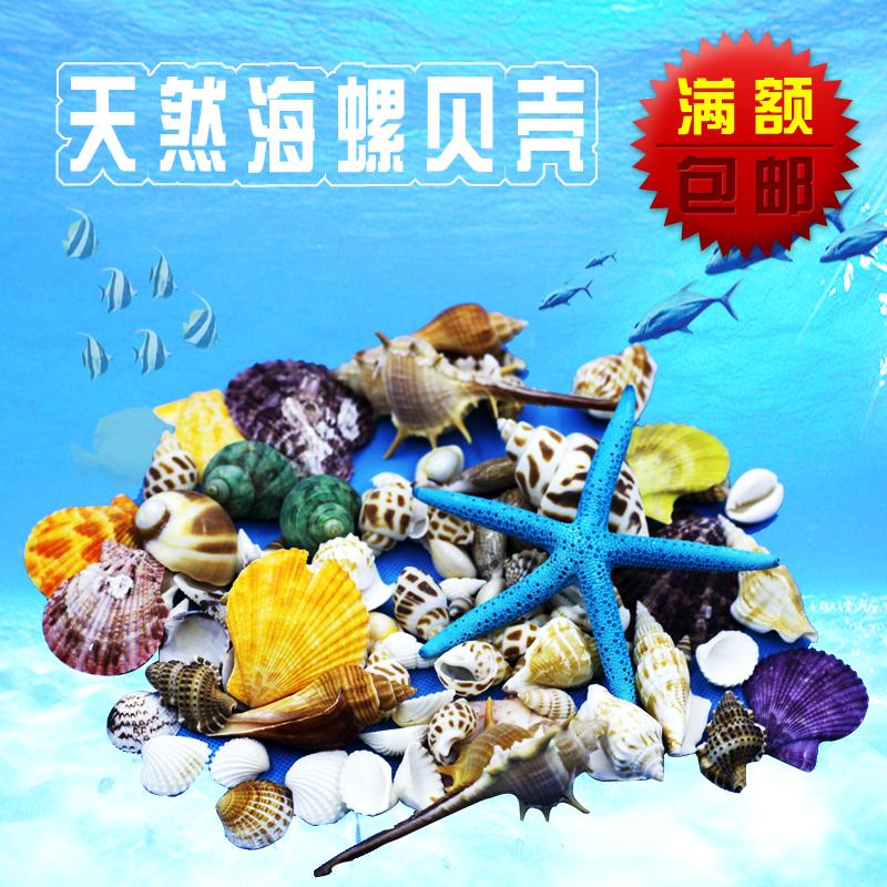 天然大贝壳海螺海星珊瑚工艺品地中海装饰品道具鱼缸造景贝壳摆件
