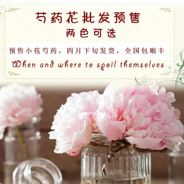 预售牡丹家庭瓶插花洛阳鲜花重瓣芍药江浙沪顺丰包邮五月花