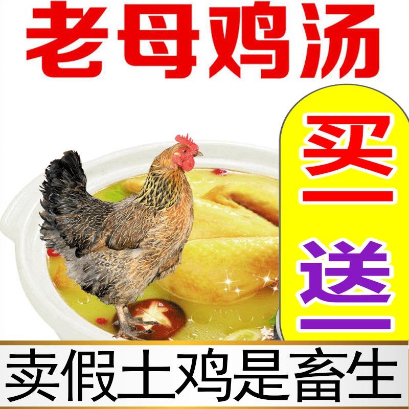 老母土鸡农家散养新鲜走地鸡跑山鸡农村散养老母土鸡草鸡农家土鸡