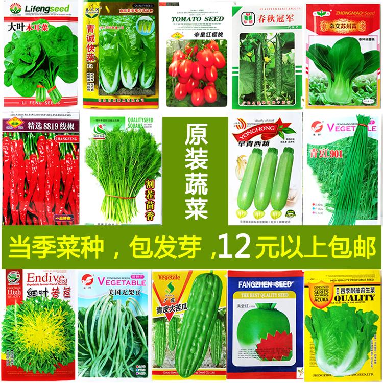 菜籽菜种大全 四季播种菜籽种大全 春季籽子阳台农家蔬菜种孑套餐