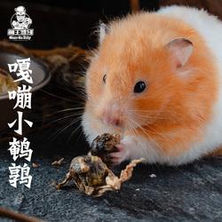 萌主驾到 仓鼠花枝金丝熊通心粉鼠冻干小鹌鹑零食 宠物貂营养食品