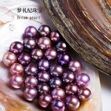 妖紫珍珠蚌自己开现场开蚌取珍珠直播鲜活河蚌天然裸珠散珠DIY