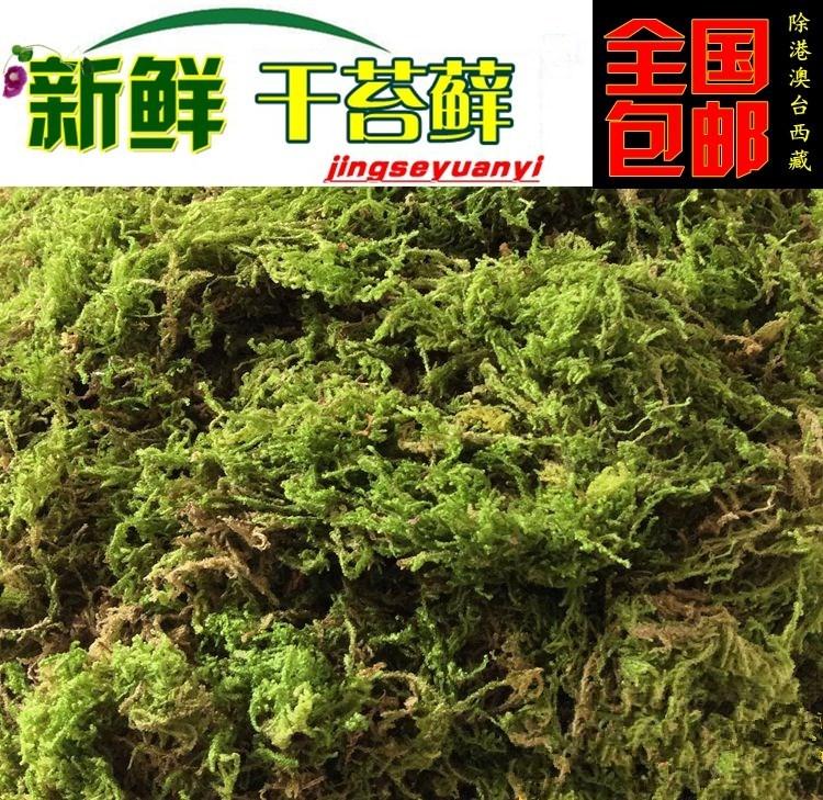 智利水苔干水苔干苔藓蝴蝶兰花兰草土多肉食虫植物营养土炫
