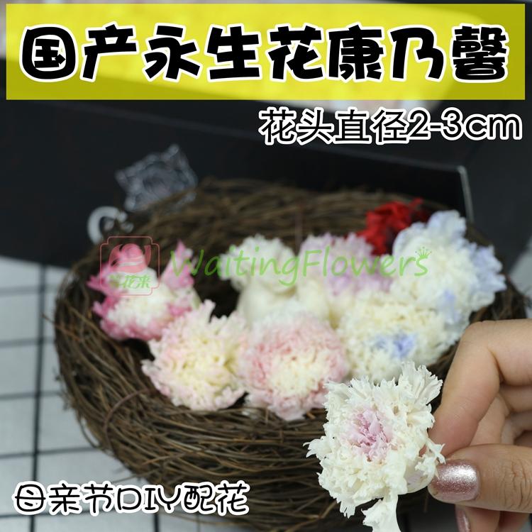 母亲节国产永生花保鲜花康乃馨2-3cm原材料包DIY礼物玻璃罩礼盒