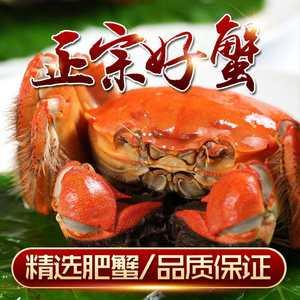 现货渔乡生态 阳澄湖大闸蟹全母 2.0两 8只鲜活 团购