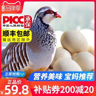 新鲜鹧鸪蛋顺丰30枚 农家飞龙蛋营养辅食土鸽子蛋鸟蛋破包赔