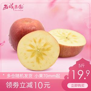 【西域果园】新疆阿克苏冰糖心苹果大果5斤