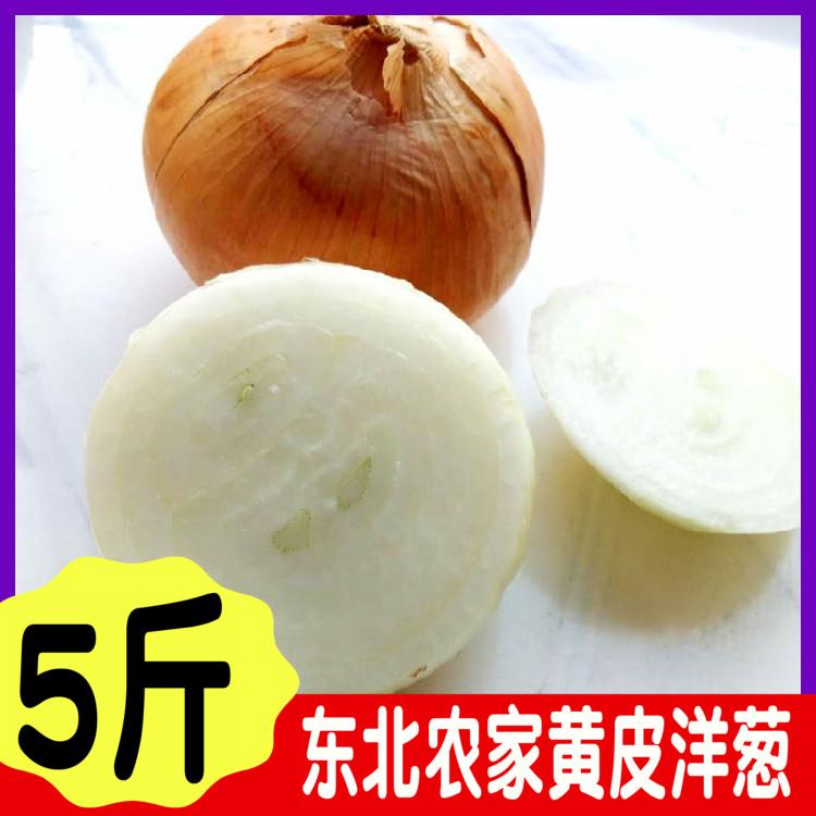 东北黄洋葱 黄皮白芯洋葱大洋葱头产地发货新鲜蔬菜5斤一份包邮