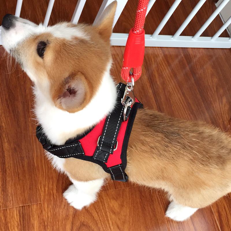 胸背带小狗狗牵引绳 背心式遛狗绳 中型小型犬柯基宠物用品狗链子热销770件需要用券