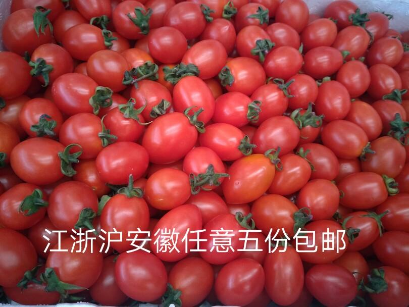 汇鲜蔬果 圣女果500g/ 新鲜樱桃小番茄 西红柿 新鲜蔬菜水果 沙拉