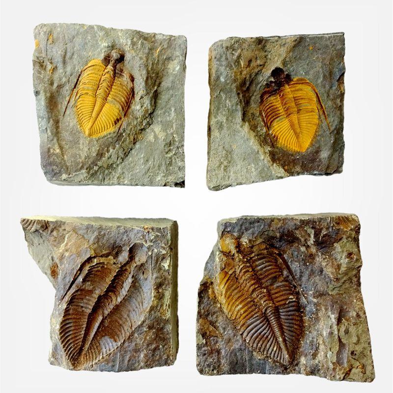 Ископаемые Артикул 629912910528
