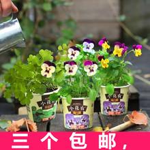 小花农春色满园开心农场diy儿童种植礼物创意迷你植物幼儿园盆栽