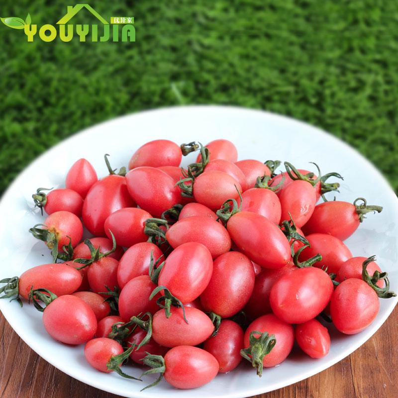 优异家樱桃小番茄圣女果新鲜蔬菜非千禧非转基因小西红柿500克
