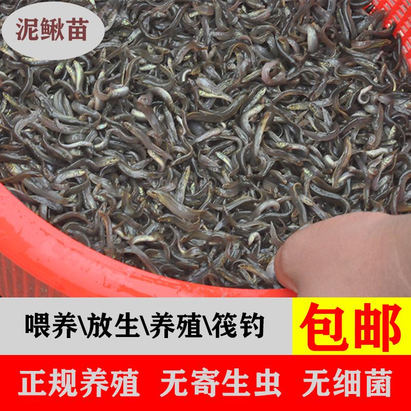 Рыбы Артикул 599133163420