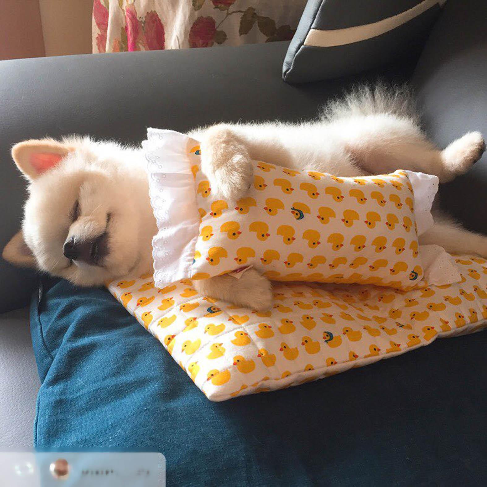 『Funny Life』韩国代购猫狗宠物小黄鸭郁金香笑脸褶边靠垫枕头
