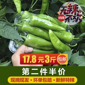 现摘新鲜辣椒3斤 东北青辣椒农家蔬菜笨辣椒薄皮辣妹子特辣绿尖椒