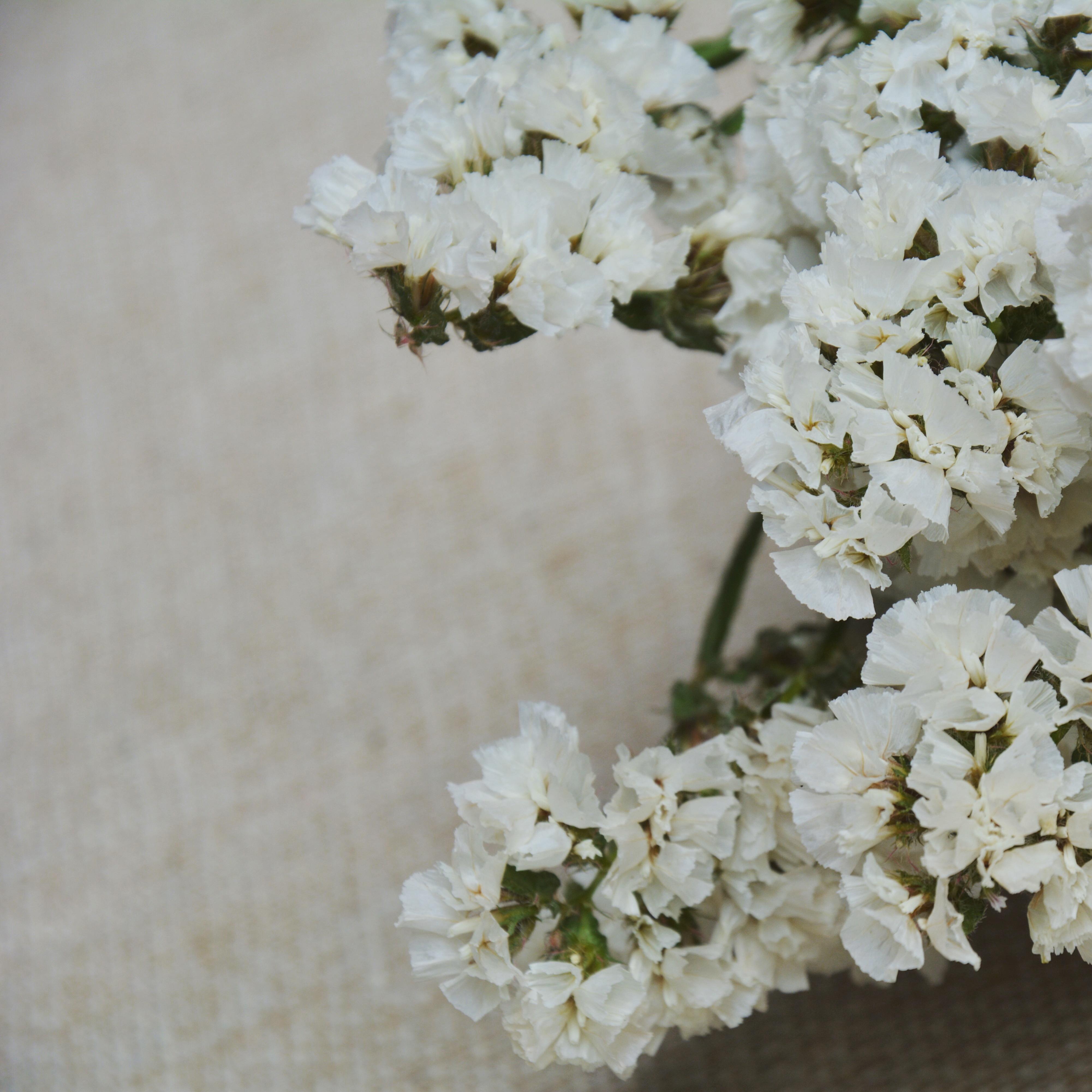 Незабудка сухие цветы натуральные высушенный офис комната домой работа комната магазин декоративный фотография стрельба реквизит