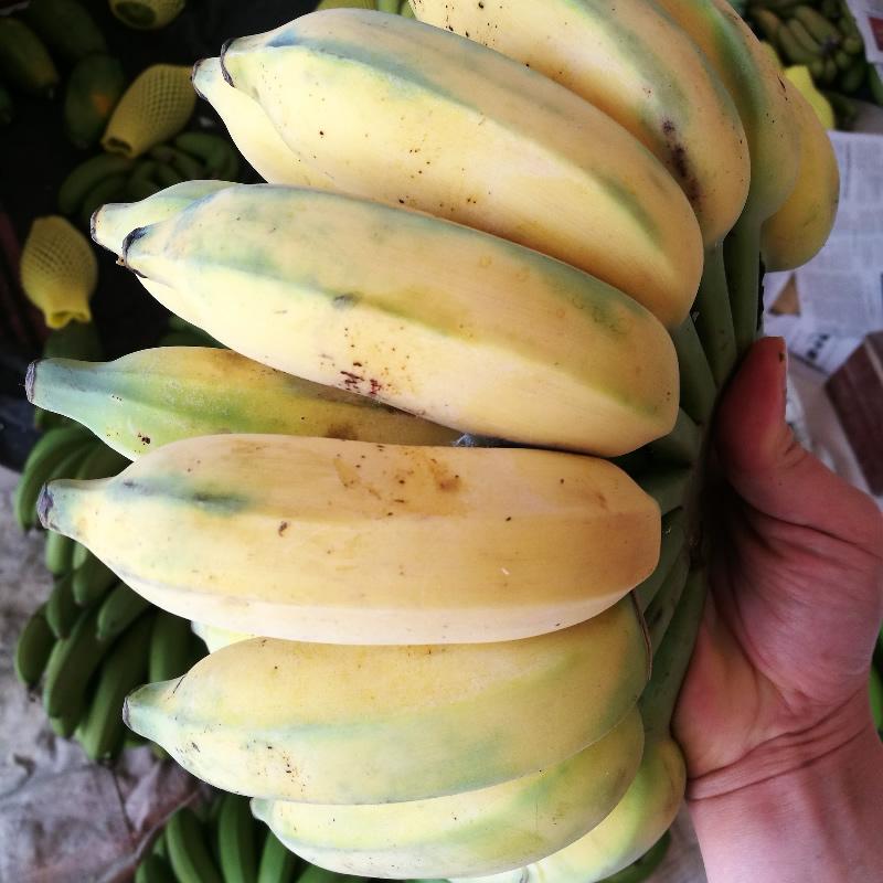 广西香蕉西贡蕉芭蕉净重10斤banana新鲜水果PK红美人皇帝蕉小米蕉