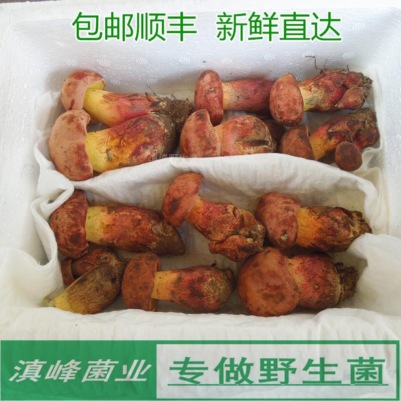 现货新鲜特级野生黄牛肝菌又名红葱见手青云南特产蘑菇味香浓包邮