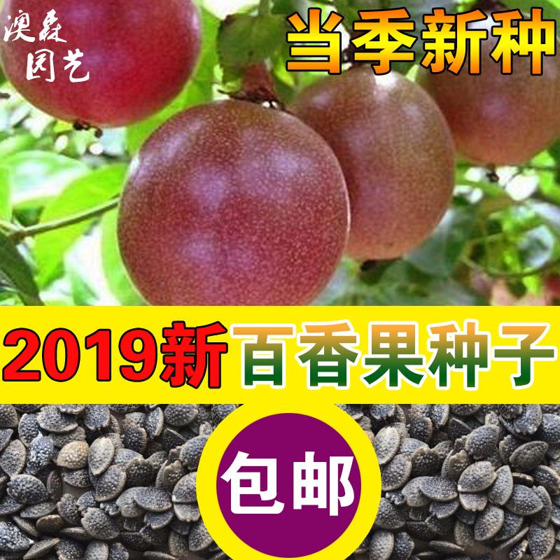 百香果种子四季播满天星紫香西番莲多年生黄金鸡蛋果种籽瓜果种子