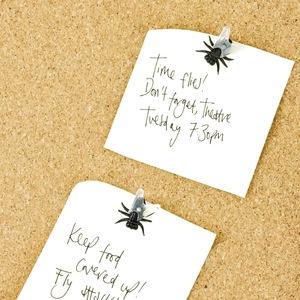英国SUCK UK 苍蝇图钉24个/Fly Push Pins 创意搞怪苍蝇软木图钉
