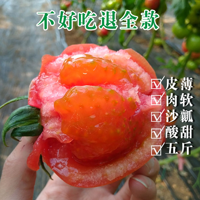 自然熟西红柿海阳普罗旺斯沙瓤新鲜纯天然农家孕妇有机蔬菜5斤