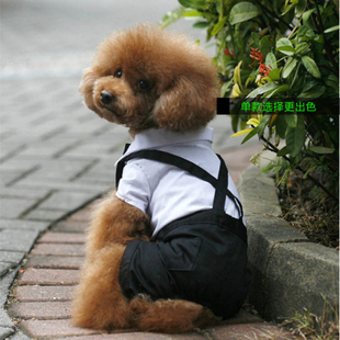 Pet dogs and cats gentleman dress in black and white suit simple style spring and summer dog clothes Teddy
