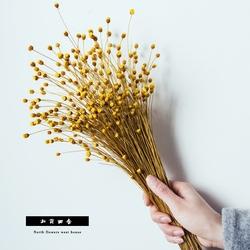 【菠萝花】天然小星花艺术干花树枝清新家居装饰摆设花束拍摄道具
