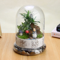 Moss Micro landscape ecological bottle Wonderful plant office Green Plant DIY mini potted decoration creative Gift