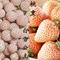 水蜜桃青莲居桃熏/白草莓菠萝莓菠萝草莓白雪公主阳台水果盆栽