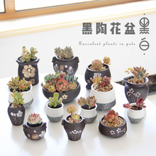 Creativity of Black Pottery Painting in Vegetable Dome Meat Flower Pot