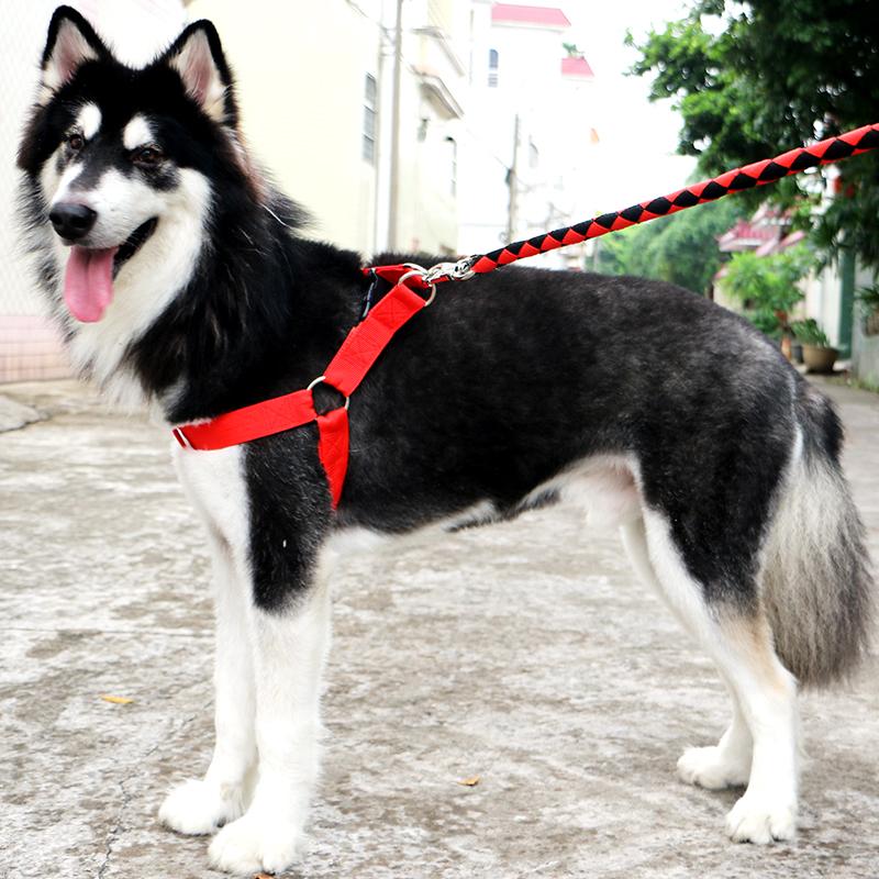 狗鏈子項圈薩摩耶金毛拉布拉多阿拉斯加中大型犬狗狗牽引繩狗用品