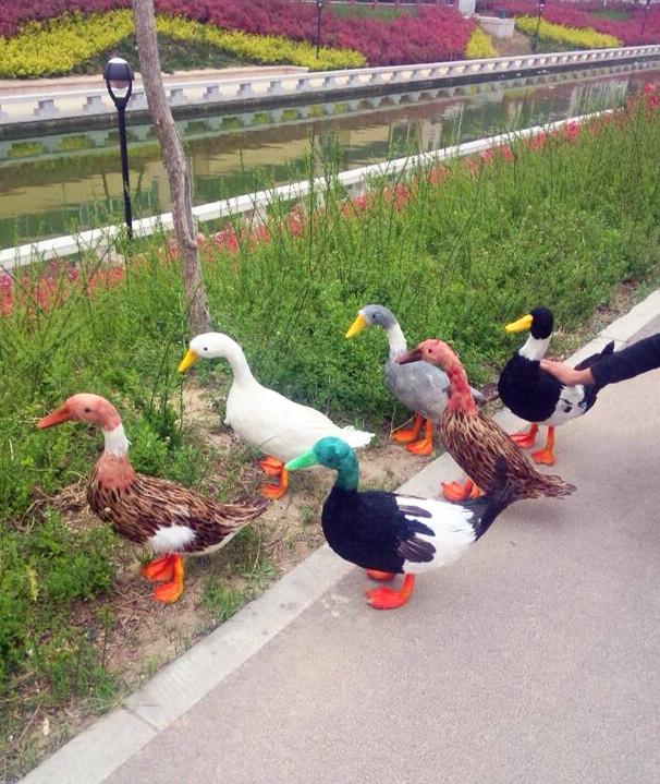 定做各种仿真动物模型道具 仿真鸭子 彩色鸭子 园林装饰教学素材