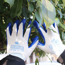 Zokuta Horticultural Tools Labor gloves horticultural dipping Gloves beautiful convenient for gardening three pieces