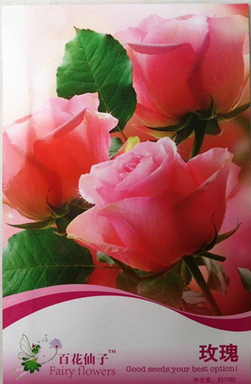花卉�N子 四季【玫瑰花�N子】粉色庭院��_盆栽�^�p芳香花卉