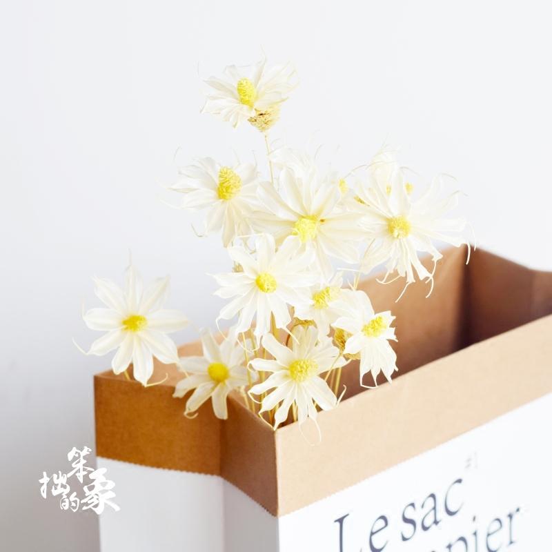 翠菊云南干花插花艺术摆件小清新橱窗装饰花手工制作小雏菊白色花