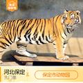 [保定市动物园-大门票]河北 保定 保定动物园 门票