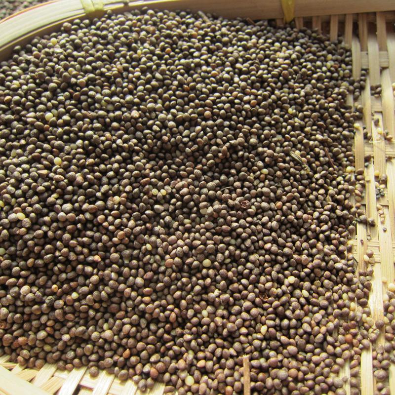 Северо-восточный зеленый лист Perilla черный Семена Suzi Suzi Семена сузи-сузи могут быть посажены маслом высокая Перилла 500 г