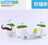 Creative Desktop Mini Plant