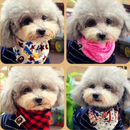 Специальное предложение словосочетание собака одежда золото волосы шарф треугольник домашнее животное треугольник домашнее животное шарф собака шарф