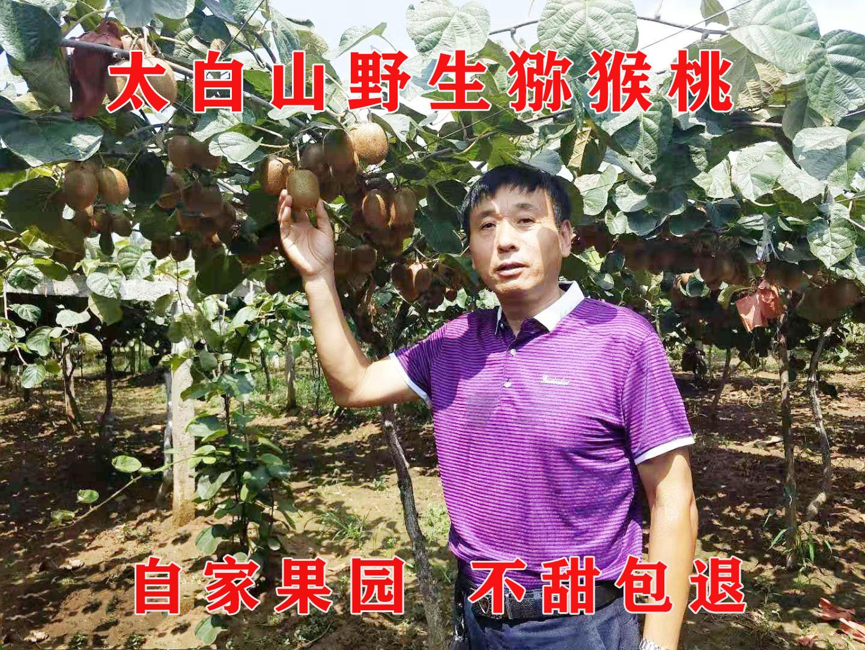 陕西猕猴桃新鲜包邮徐香猕猴桃野生奇异果猕猴桃绿心整箱应季水果