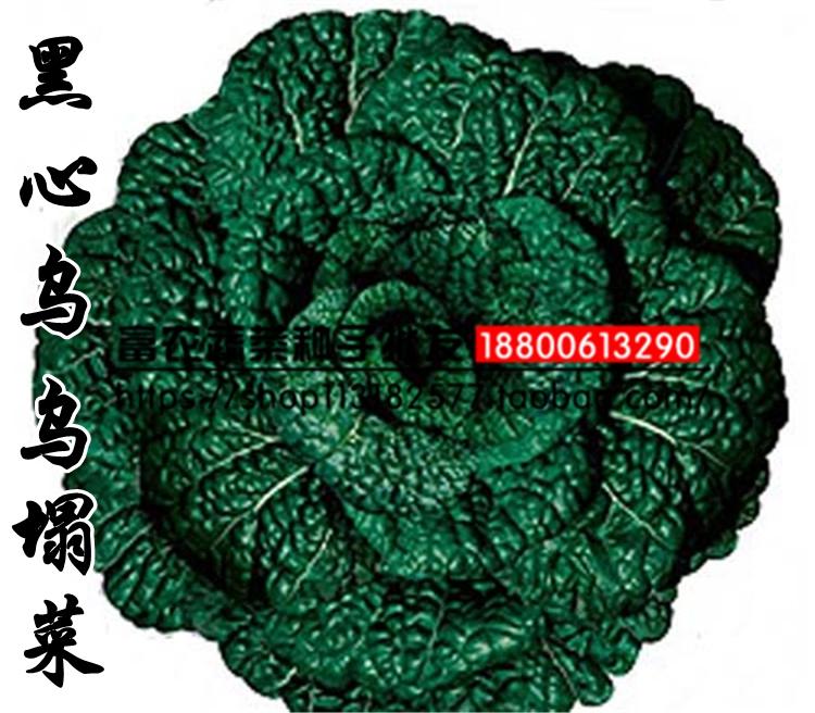 大叶黑心乌种子 乌塌菜种子 本品属早熟高产耐寒抗病蔬菜瓜果种子