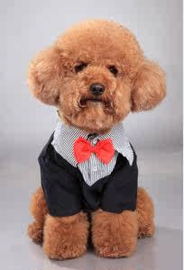宠物  狗衣服 狗服饰 假两件套  泰迪比熊 9.9包邮 西装