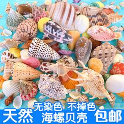 天然贝壳海螺海星鱼缸造景手工diy打孔漂流瓶装饰卷贝鱼寄居蟹壳