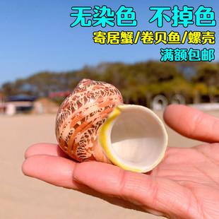 古文螺猫眼蝾螺卷贝鱼寄居蟹备用替换壳专用壳天然大海螺鱼缸造景