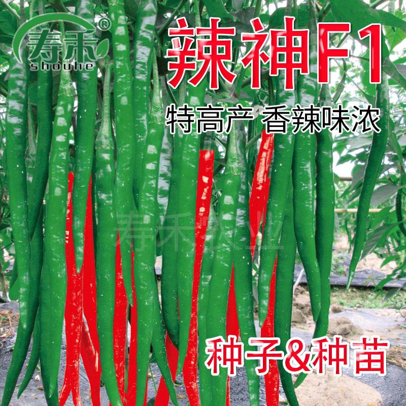 寿光蔬菜种子