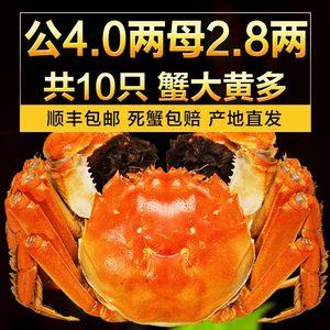 姑苏蟹澄阳澄湖大闸蟹鲜活现货螃蟹公4.0两母2.8两5对共10只