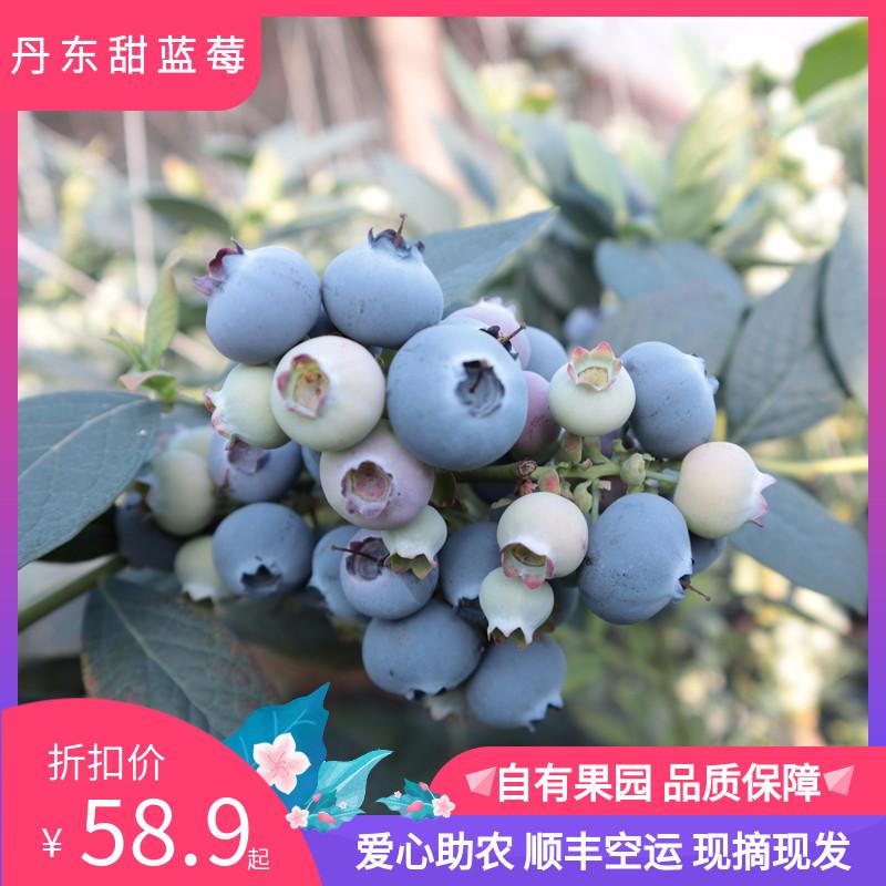 丹东甜蓝莓鲜果大果新鲜整箱水果宝宝辅食非佳沃云南进口顺丰包邮
