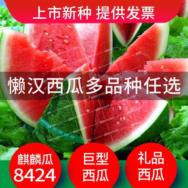 Watermelon seed Daquan field courtyard self planting kylin watermelon Jingxin watermelon lazy melon w watermelon seed