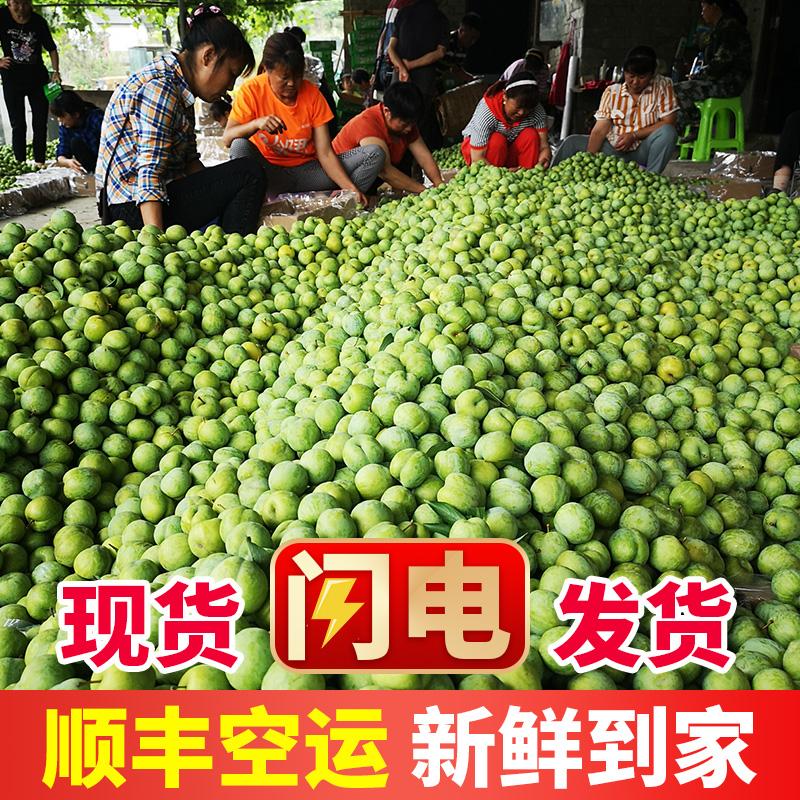 脱骨李子10斤青脆李水果新鲜当季5斤四川重庆土甜奈清非贵州巫山